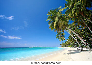 perfect, tropisch eiland, strand, paradijs