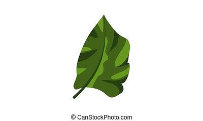 pictogram, animatie, tropische , flora, blad