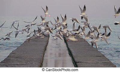 pijler, seagulls, schieten omhoog, van, beton