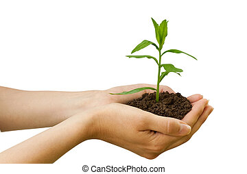 plant, agriculture., hand