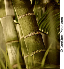 plant, groene, close-up
