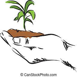 plant, hand, illustratie, hangend
