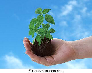 plant, hand