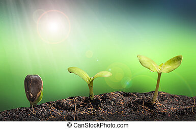 plant, natuur, terrein, vuurpijl, lens, stapel, concep, kleine, groene