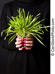 plant, tarwe, voor het houden, vrouwlijk, afsluiten, potted