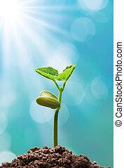 plant, zonlicht