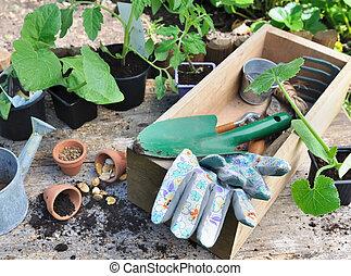 plantatie, agardening, zaden, gereedschap, seedlings