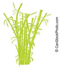 plantatie, bamboe