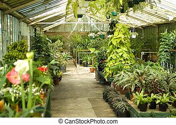 planten, babykamer, broeikas, aanzicht