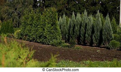 planten, babykamer, hout
