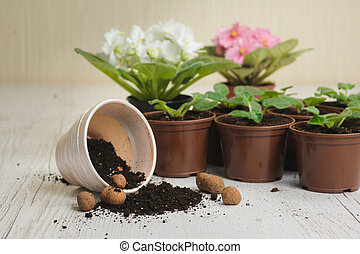 planten, bloem, potting grond, potten, tafel