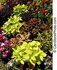 planten, coloruful