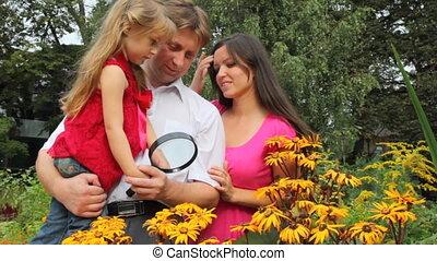 planten, gezin, enig, ontdekken, glas, vergroten