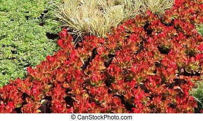 planten, potted, babykamer, kleurrijke