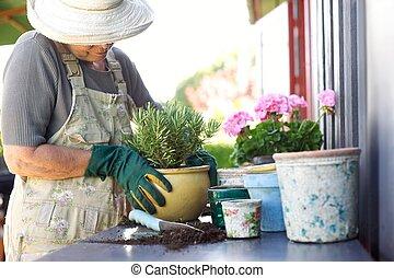 planten, potting, potten, jonge, senior, tuinman