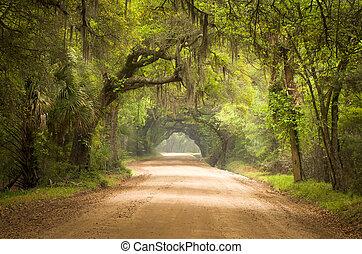 plantkunde, mos, vuil, eiland, eik, straat, bomen, baai, plantatie, leven, diep, edisto, spaanse , sc, charleston, zuiden, bos