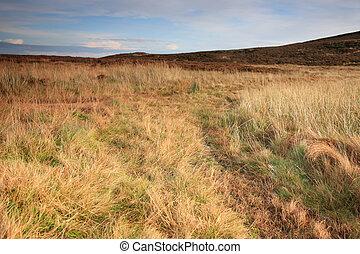 platteland, cumbrian
