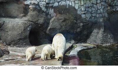 polair, grot, twee, beer, dierentuin, gaan, kinderen