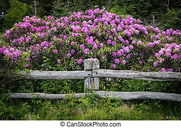 post, rododendron, op, omheining, bloemen