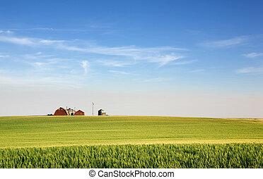 prairie, bouwland
