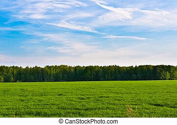 prairie, hemel, landscape
