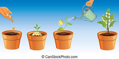 proces, groeiende, boompje, geld