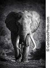 processing), elefant, (artistic, stier