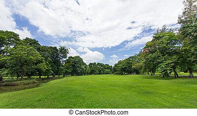 publiek, blauwe hemel, bomen, park, groen gazon