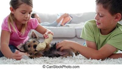 puppy, spelend, siblings