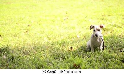 purebred, park, honden, zittende