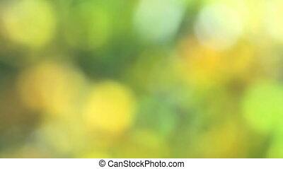 realistisch, bokeh, groene, natuurlijk licht