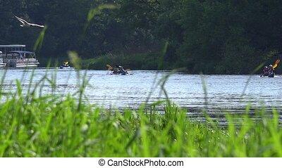 reeds., kayaks, sporten, water, paar, door, team, wild, rivier, het snelen