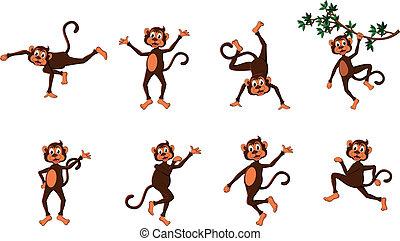reeks, komisch, aap, schattig