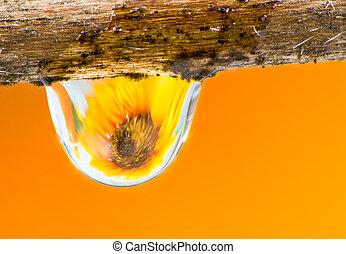 regendruppel, bloem
