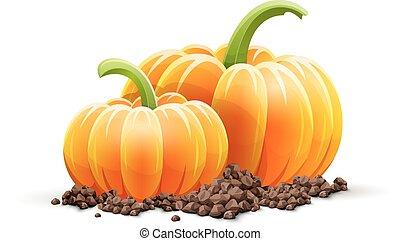 rijp, terrein, groentes, herfst, oogsten, pompoen