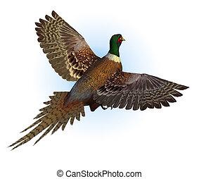 ring-necked fazant, vliegen