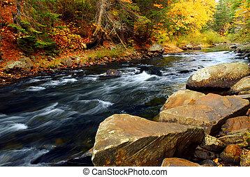 rivier, bos, herfst