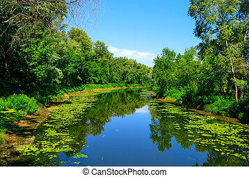 rivier, groene bomen