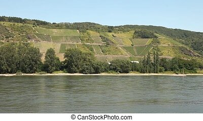 rivier, winegrowing, (rhine)