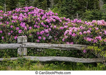 rododendron, bevestigingslijst, deken, omheining
