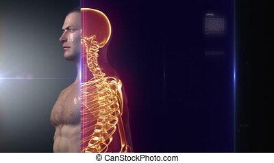 rontgen, lichaam, medisch, menselijk, scanderen