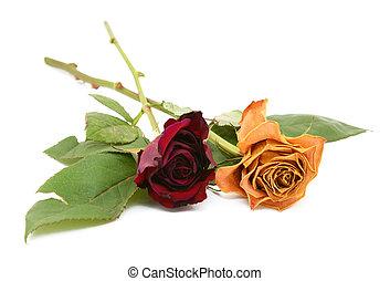 roos, bloemen, twee, sterven, stammen