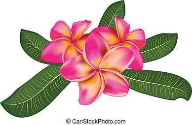 roze, bladeren, plumeria
