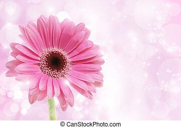 roze bloem, gerbera