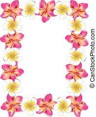roze, frangipani, frame, bloemen, witte