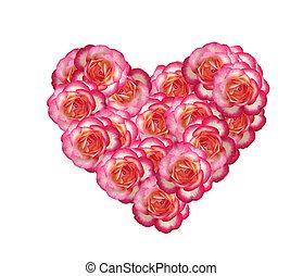 roze, hart, gemaakt, valentines, vrijstaand, rozen, achtergrond, witte , dag