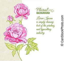 roze, peonies, staal, achtergrond, tekst