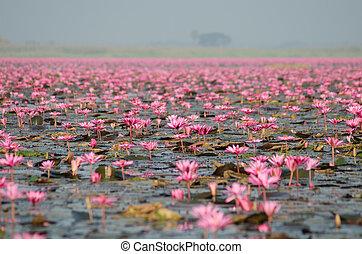 roze, thailand), (unseen, lotus, zee
