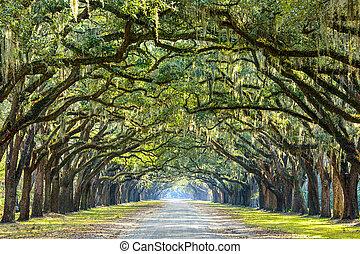 savanne, usa, georgië, eik, plantation., boompje, historisch, wormsloe, lined, straat