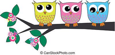 schattig, drie, uilen